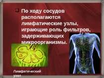 По ходу сосудов располагаются лимфатические узлы, играющие роль фильтров, зад...