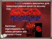 Артерії і вени служать виключно для транспортування крові по всьому тілу Капі...