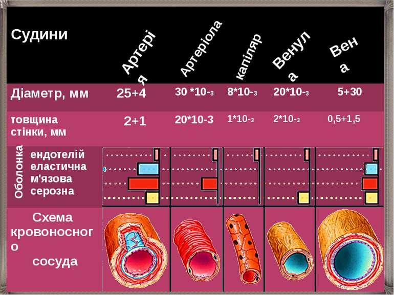 Артерія Артеріола капіляр Венула Вена Оболонка Судини Діаметр, мм 25+4 30 *10...