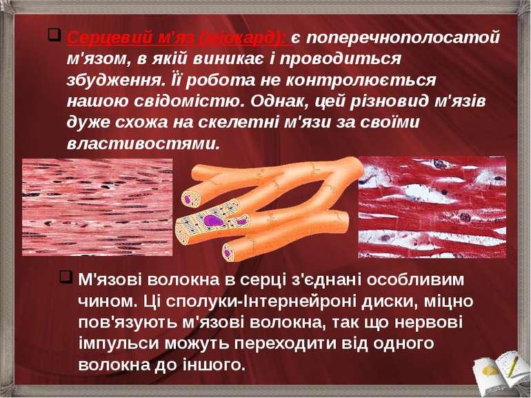 М'язові волокна в серці з'єднані особливим чином. Ці сполуки-Інтернейроні дис...