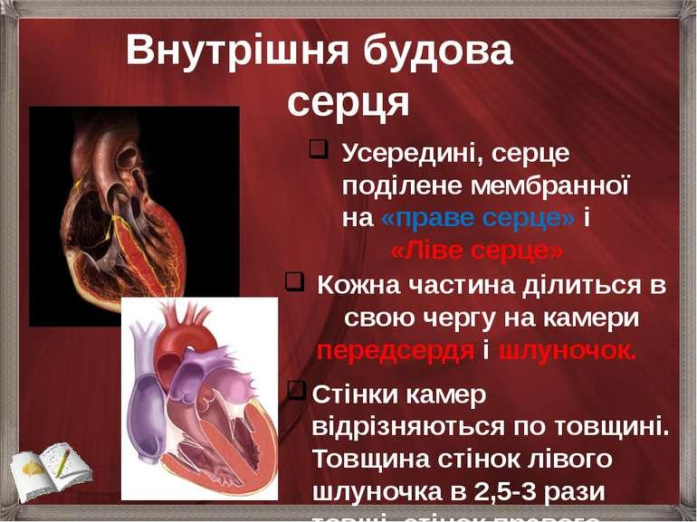 Внутрішня будова серця Усередині, серце поділене мембранної на «праве серце» ...