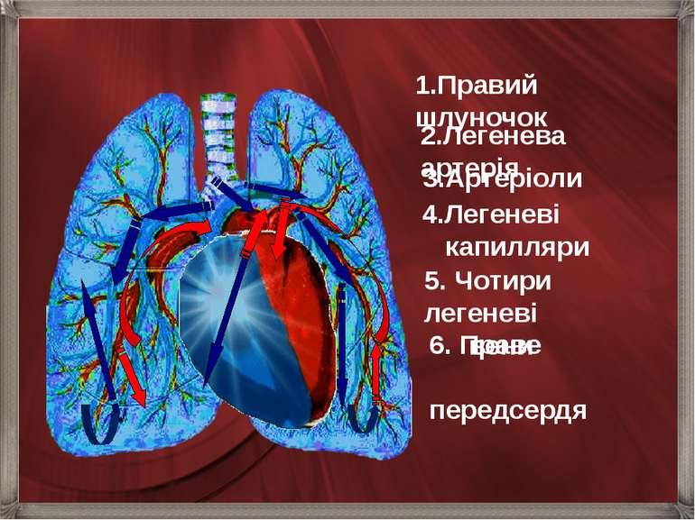 6. Праве  передсердя 1.Правий шлуночок 2.Легенева артерія 3.Артеріоли 4.Л...