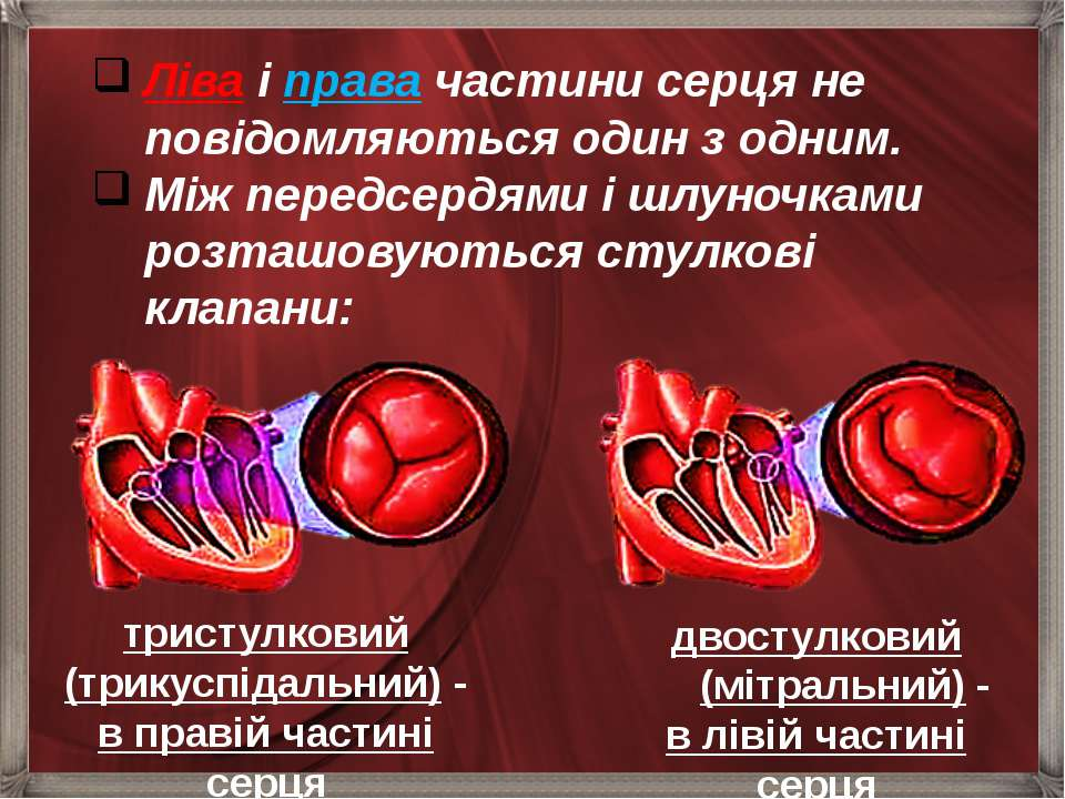 Ліва і права частини серця не повідомляються один з одним. Між передсердями і...