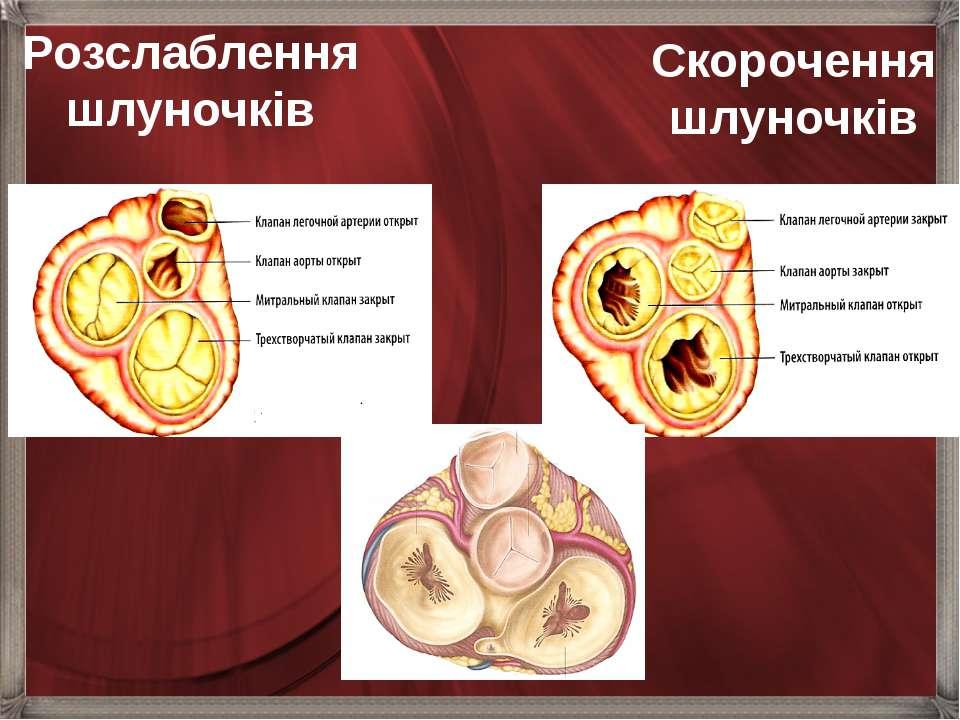 Розслаблення шлуночків Скорочення шлуночків