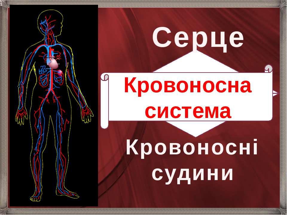 Серце Кровоносні судини Кровоносна система