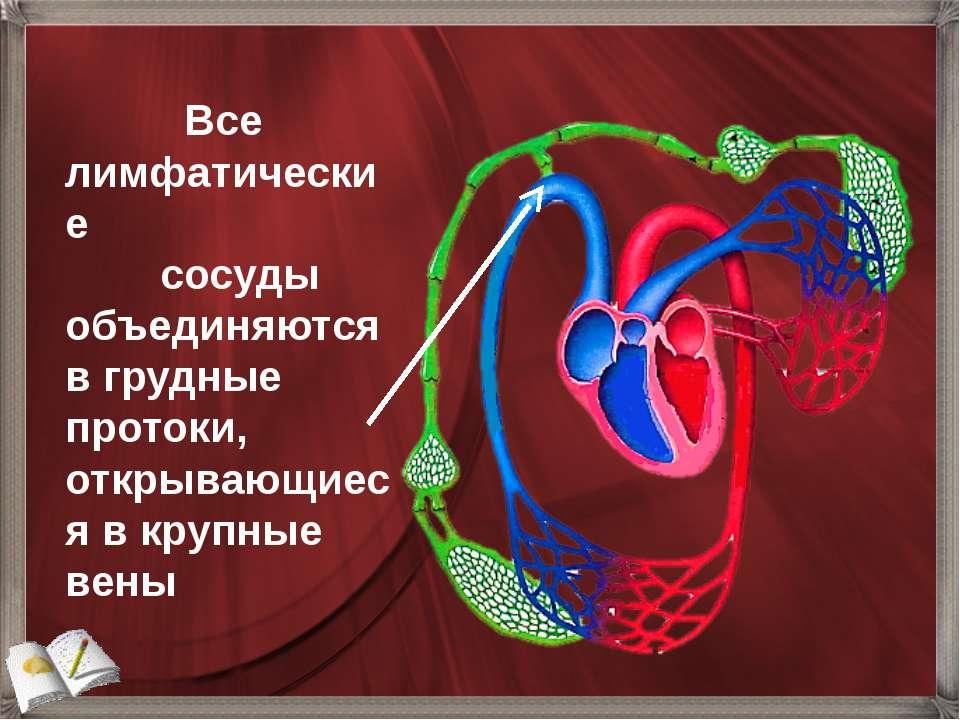 Все лимфатические сосуды объединяются в грудные протоки, открывающиеся в круп...