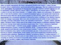 Дятел Дятел великий строкатий, або дятел звичайний (Dendrocopos major) — птах...