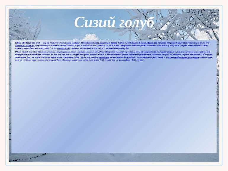 Сизий голуб Си зий го луб(Columba livia)— широко поширений птах родиниголу...