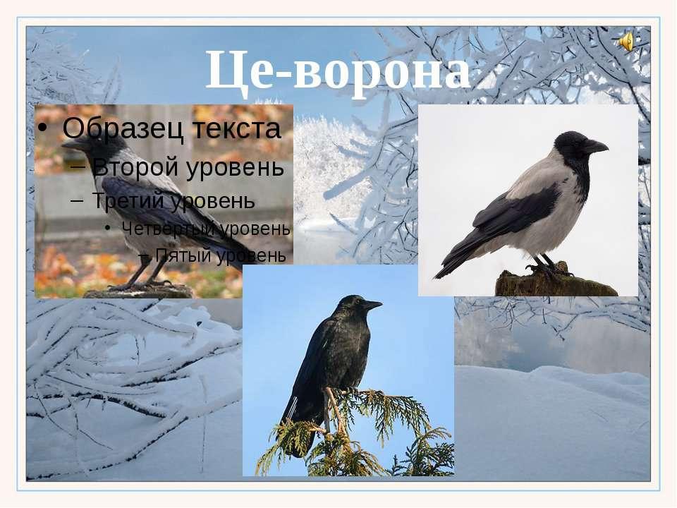 Це-ворона
