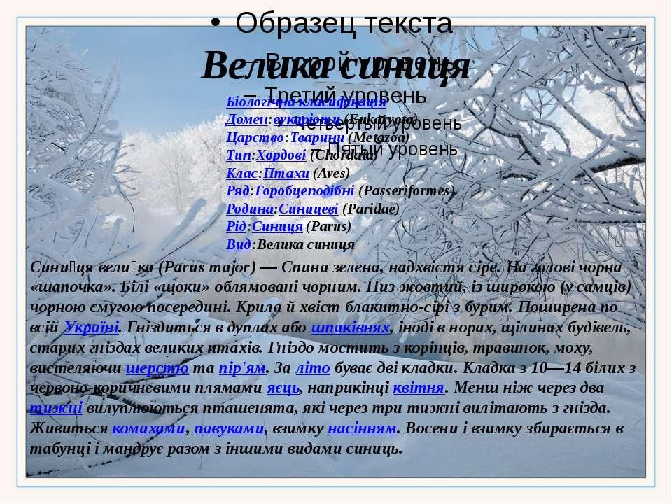 Велика синиця Біологічна класифікація Домен:еукаріоти (Eukaryota) Царство:Тва...