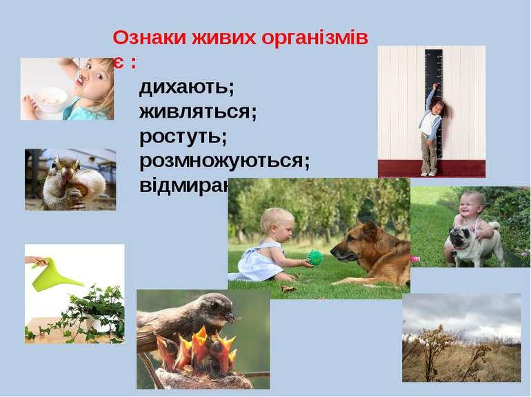 Ознаки живих організмів є : дихають; живляться; ростуть; розмножуються; відми...