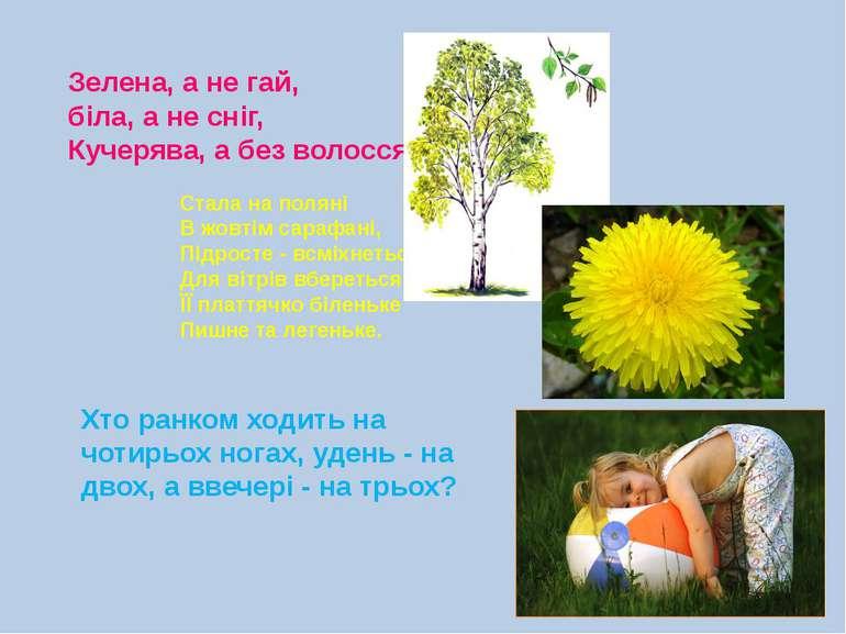 Зелена, а не гай, біла, а не сніг, Кучерява, а без волосся. Стала на поляні В...
