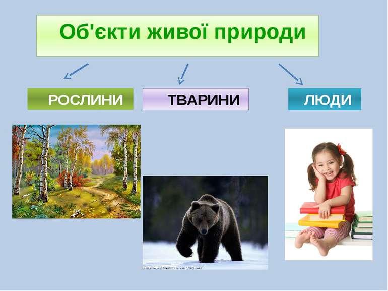 Об'єкти живої природи РОСЛИНИ ТВАРИНИ ЛЮДИ