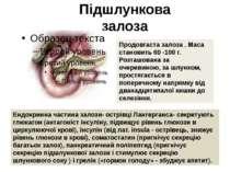 Підшлункова залоза Продовгаста залоза . Маса становить 60 -100 г. Розташована...