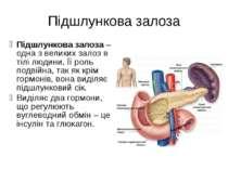 Підшлункова залоза Підшлункова залоза – одна з великих залоз в тілі людини. Ї...