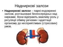 Надниркові залози Надниркові залози – парні ендокринні залози, розташовані бе...