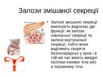 Залози змішаної секреції Залози змішаної секреції виконують водночас дві функ...