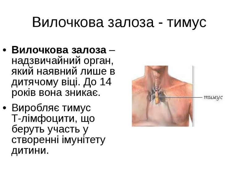 Вилочкова залоза - тимус Вилочкова залоза – надзвичайний орган, який наявний ...