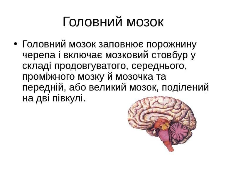 Головний мозок Головний мозок заповнює порожнину черепа і включає мозковий ст...