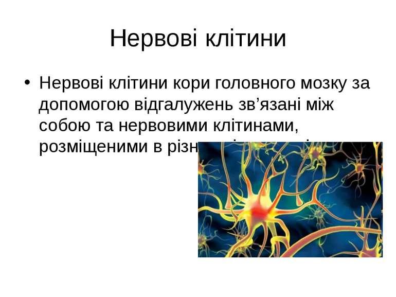 Нервові клітини Нервові клітини кори головного мозку за допомогою відгалужень...