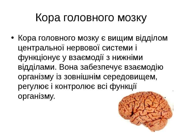 Кора головного мозку Кора головного мозку є вищим відділом центральної нервов...