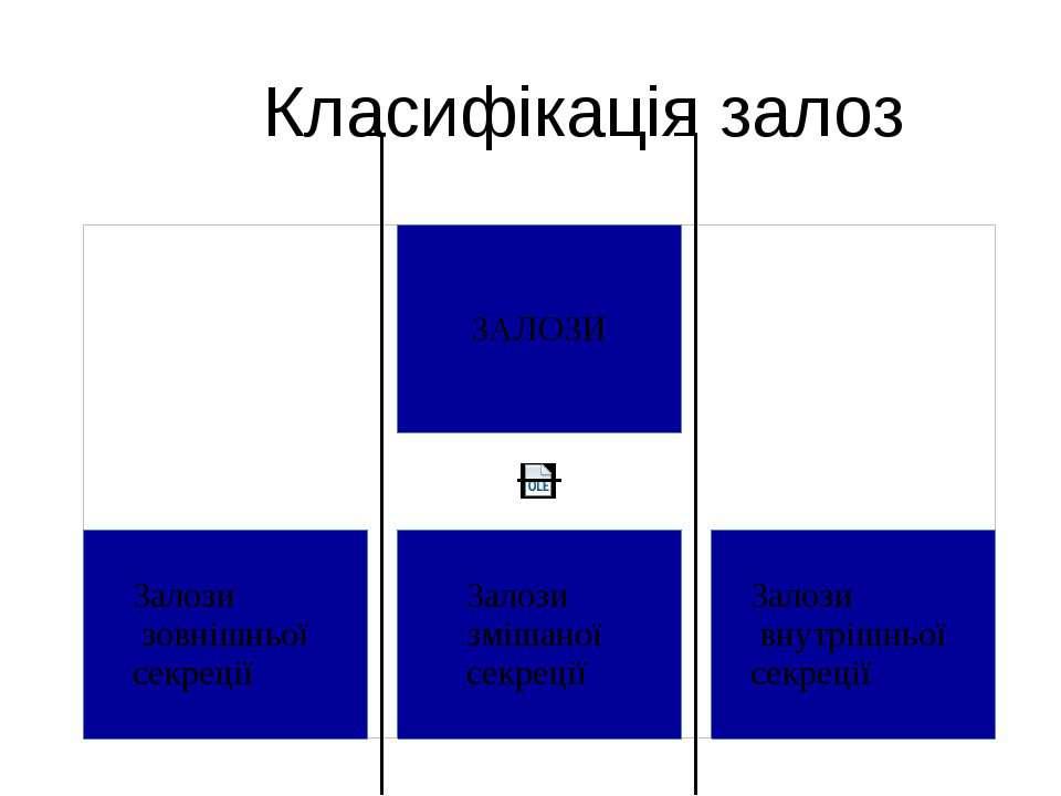 Класифікація залоз