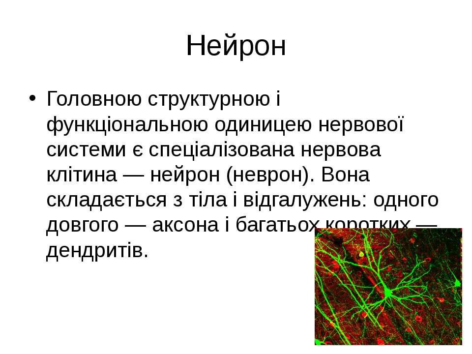 Нейрон Головною структурною і функціональною одиницею нервової системи є спец...