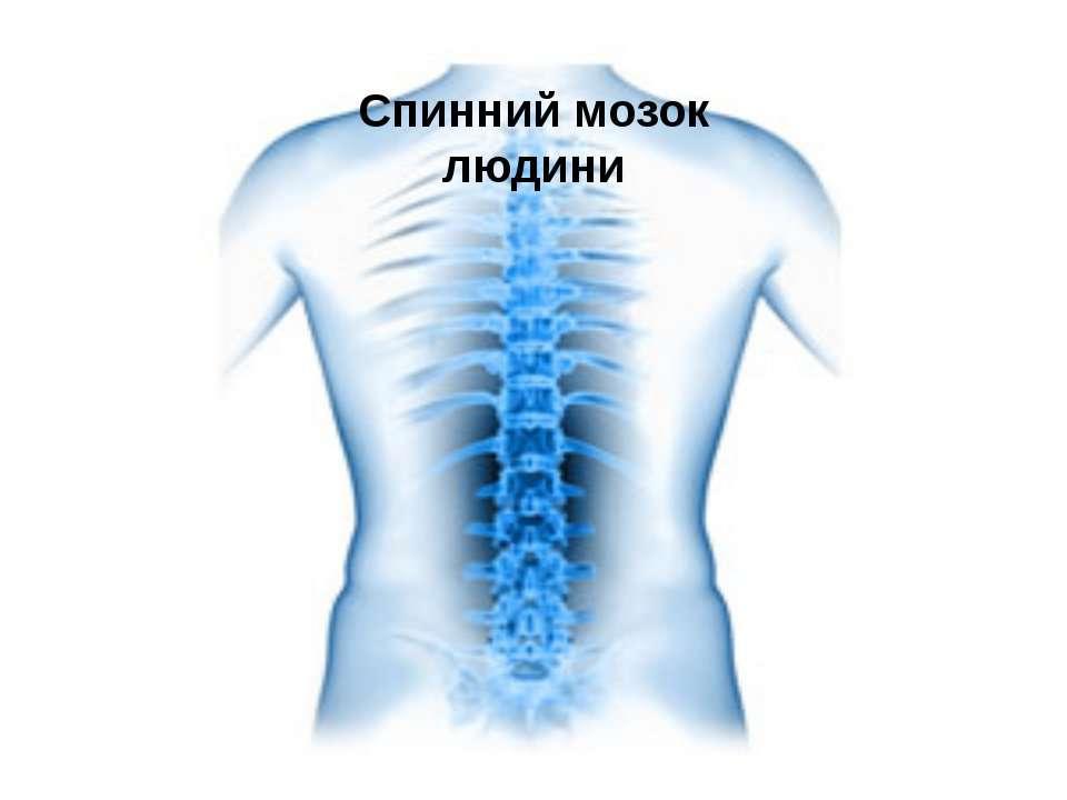 Спинний мозок людини