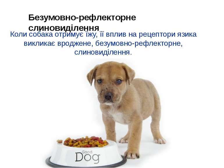 Коли собака отримує їжу, її вплив на рецептори язика викликає вроджене, безум...