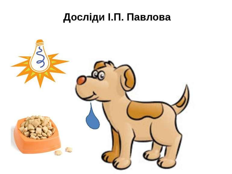 Досліди І.П. Павлова