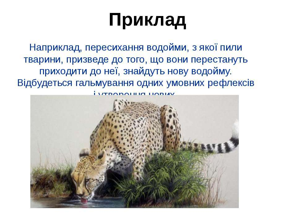 Наприклад, пересихання водойми, з якої пили тварини, призведе до того, що вон...