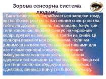 Багатоколірність сприймається завдяки тому, що колбочки реагують на певний сп...