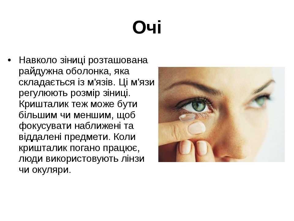 Очі Навколо зіниці розташована райдужна оболонка, яка складається із м'язів. ...