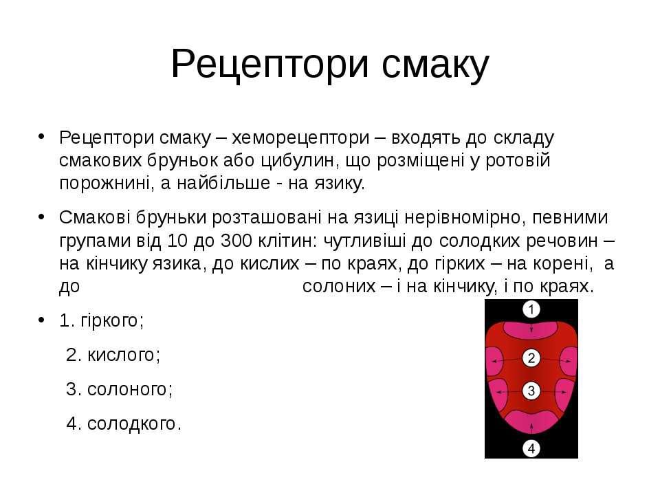 Рецептори смаку Рецептори смаку – хеморецептори – входять до складу смакових ...