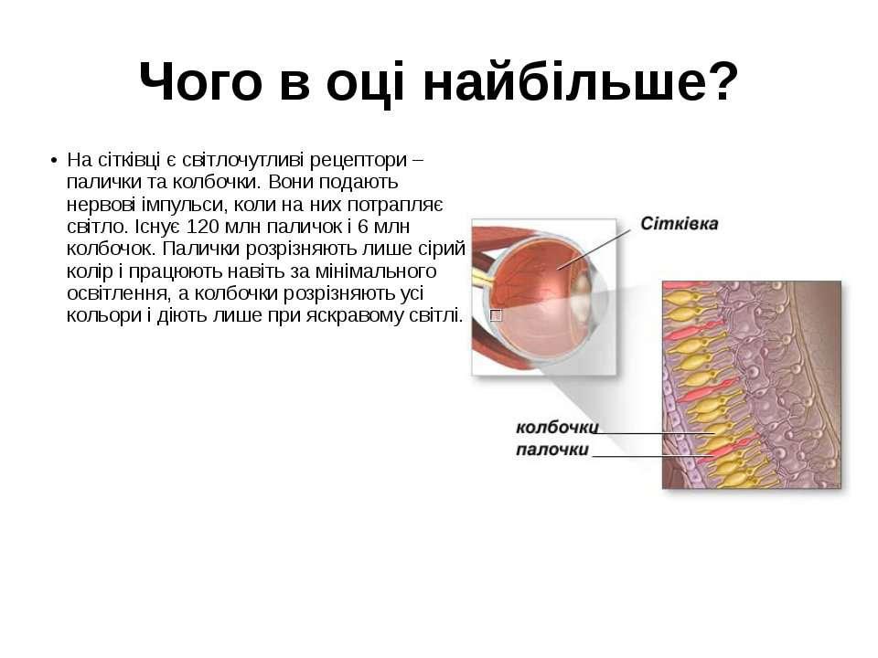 Чого в оці найбільше? На сітківці є світлочутливі рецептори – палички та колб...