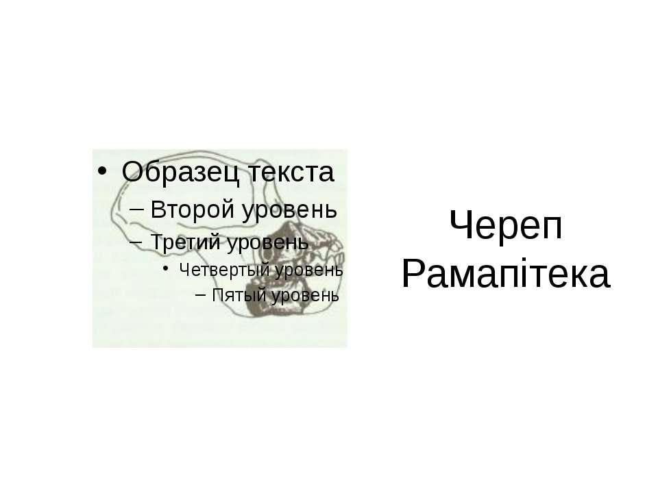 Череп Рамапітека