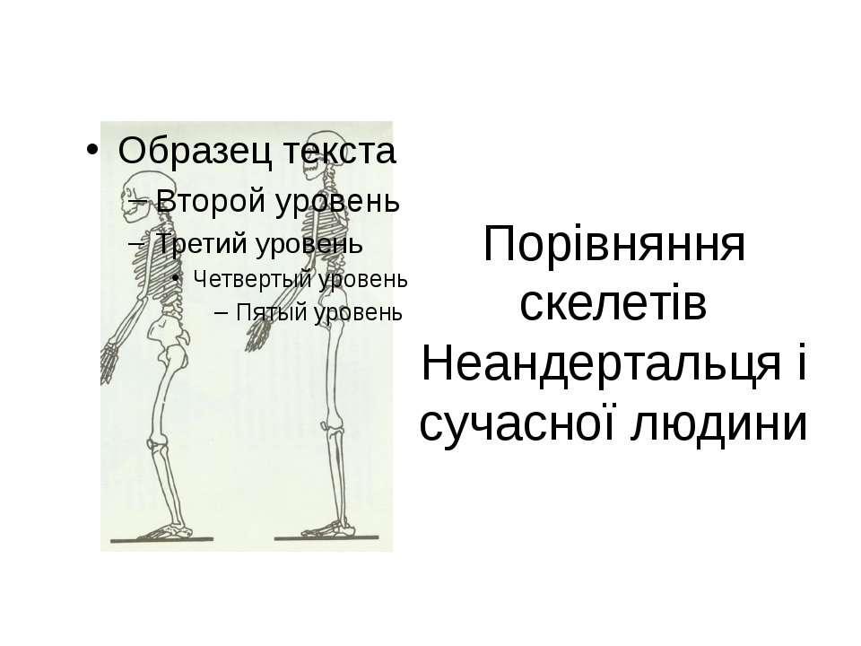 Порівняння скелетів Неандертальця і сучасної людини