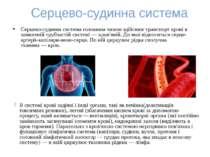 Серцево-судинна система Серцево-судинна системаголовним чином здійснює транс...