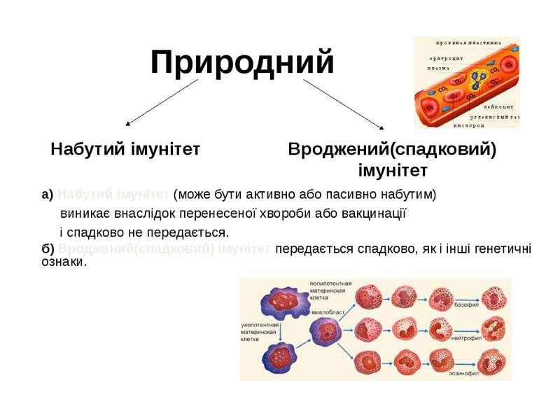 Природний Вроджений(спадковий) імунітет Набутий імунітет б) Вроджений(спадков...