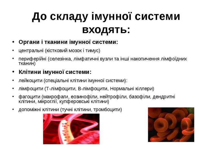 До складу імунної системи входять: Органи і тканини імунної системи: централь...