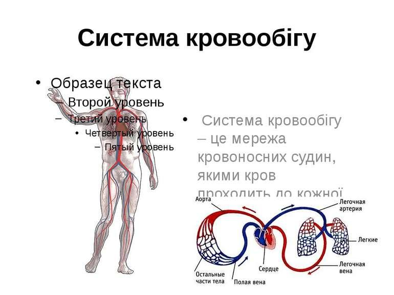 Система кровообігу Система кровообігу – це мережа кровоносних судин, якими кр...