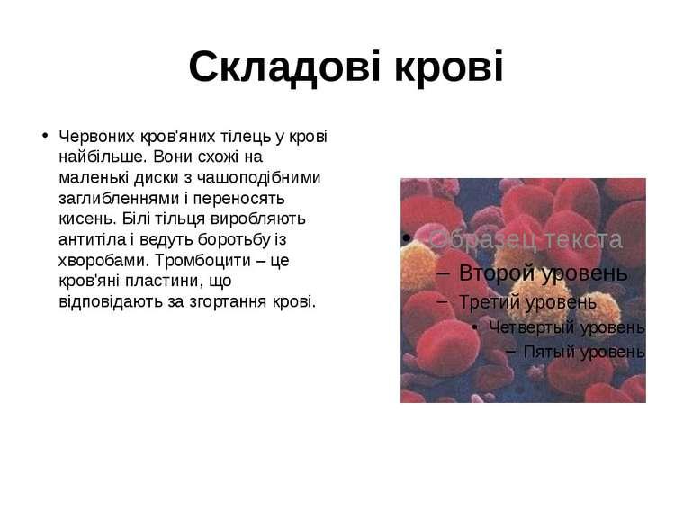 Складові крові Червоних кров'яних тілець у крові найбільше. Вони схожі на мал...