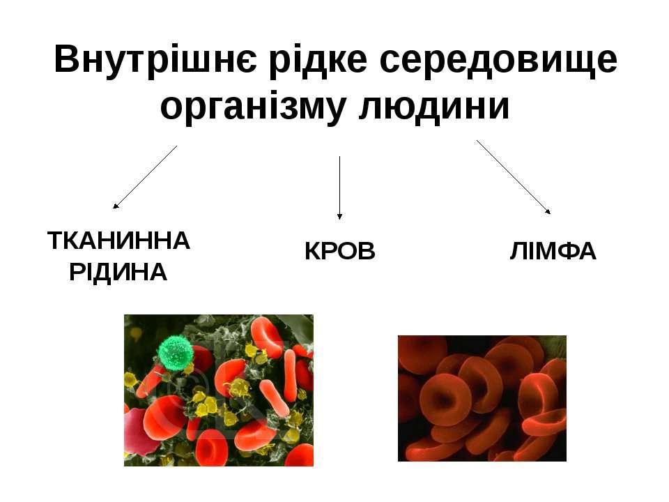 Внутрішнє рідке середовище організму людини КРОВ ЛІМФА ТКАНИННА РІДИНА