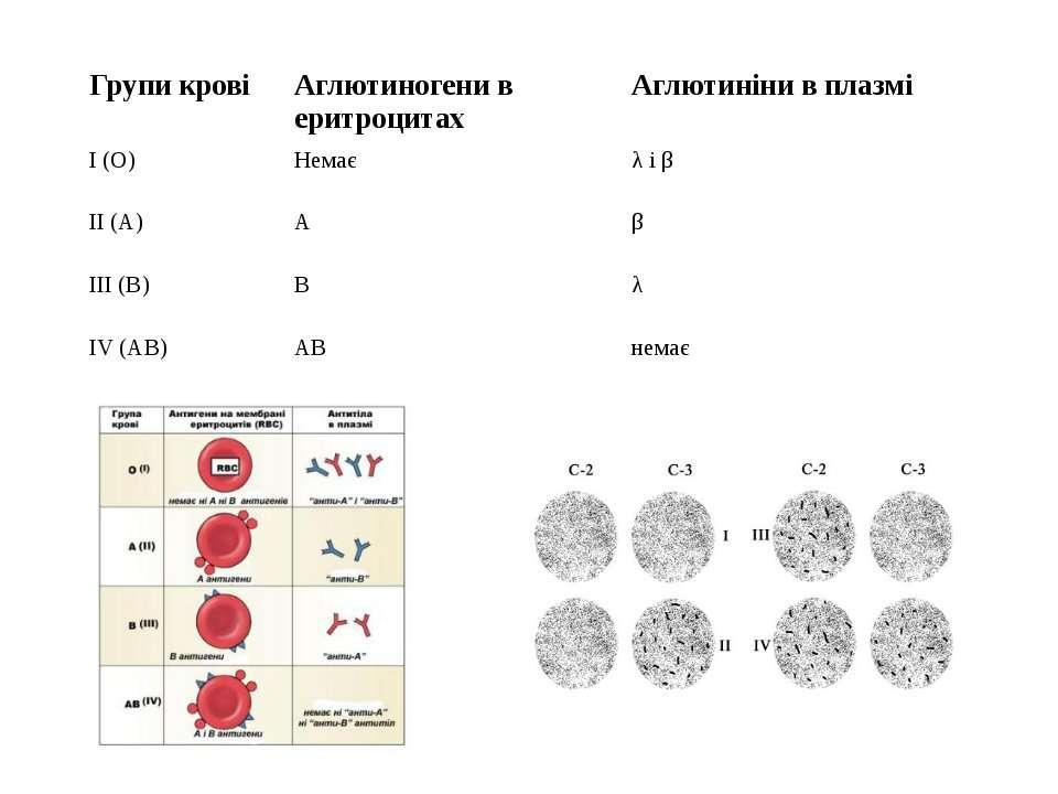 Групи крові Аглютиногени в еритроцитах Аглютиніни в плазмі І (О) Немає λ і β ...