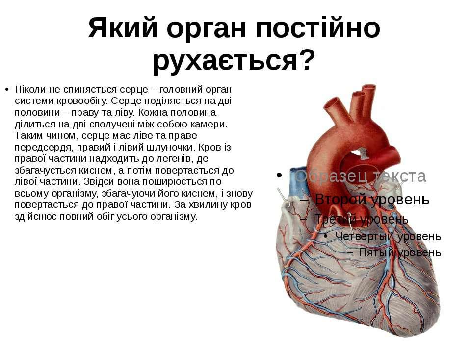 Який орган постійно рухається? Ніколи не спиняється серце – головний орган си...