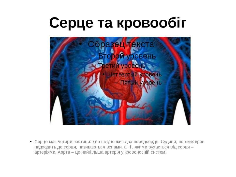 Серце та кровообіг Серце має чотири частини: два шлуночки і два передсердя. С...