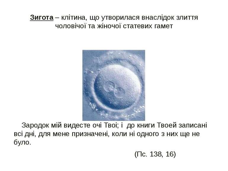 Зигота – клітина, що утворилася внаслідок злиття чоловічої та жіночої статеви...