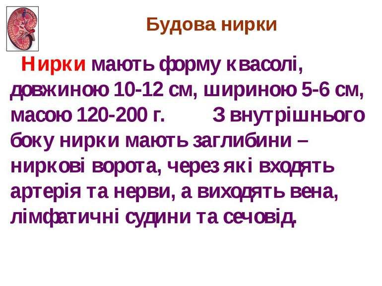 Нирки мають форму квасолі, довжиною 10-12 см, шириною 5-6 см, масою 120-200 г...