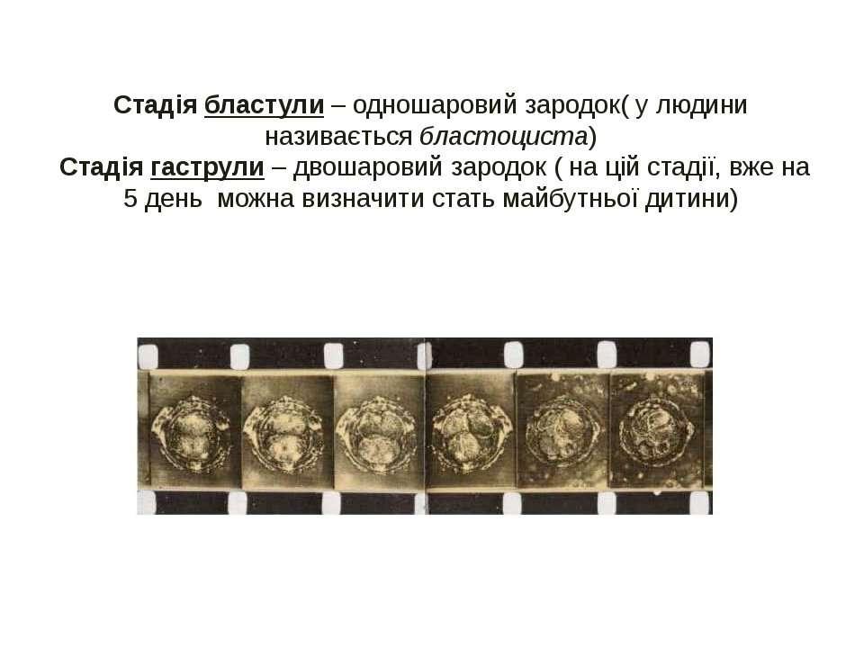 Стадія бластули – одношаровий зародок( у людини називається бластоциста) Стад...