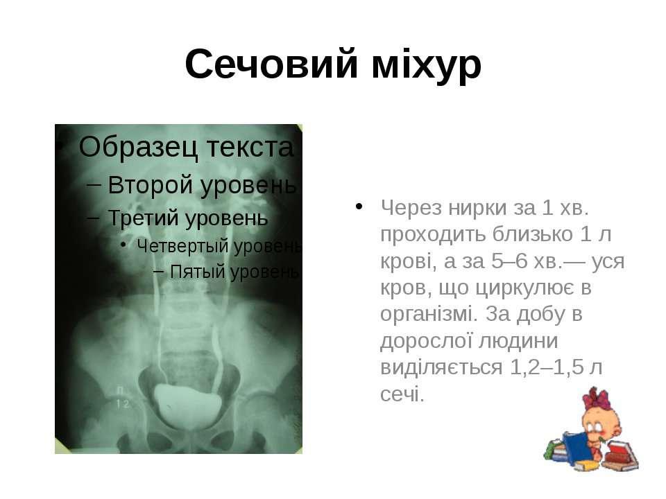 Через нирки за 1 хв. проходить близько 1 л крові, а за 5–6 хв.— уся кров, що ...